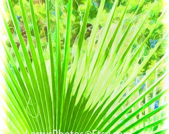 Abstract fan palm art,  Nature photography, Green plants, Digital painting style, Abstract nature