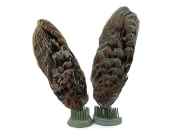 Pair Antique Millinery Supply Brown and Blue Bird Feathers