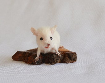 Taxidermy mouse.
