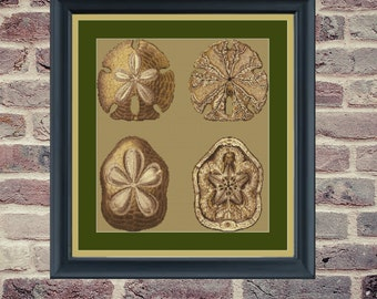 Counted Cross Stitch Pattern - Four Sand Dollars - PDF Instant Digital Download