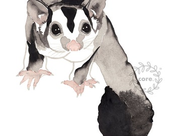 Sugar Glider Australian Fauna watercolour illustration