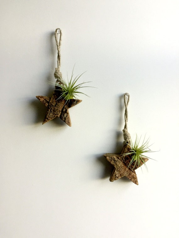 Small wood star wall hanging mounted with air plant and for Air plant wall art