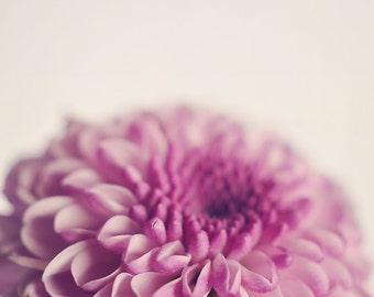Pink Flower Photography, Minimal Floral Photograph, Vertical Wall Art , Macro Flower Photo Print, Soft Pink Botanical Home Wall Decor