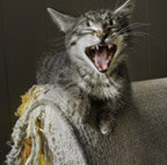 How To Repel Cats From Scratching Furniture