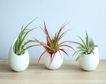 Air plant vase etsy for Air vase