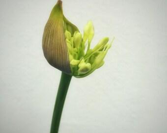 Flower Bloom Awakening