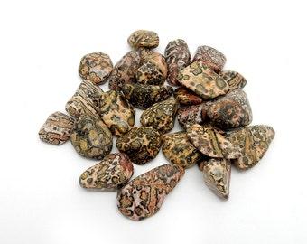 Tumbled Stone - Jasper - Tumbled Leopard Skin Jasper By 1 and 5 Pieces - (RK78B12-01)