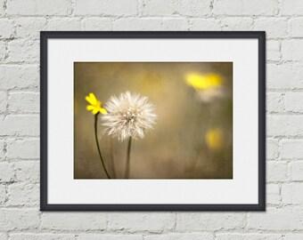 Dandelion Wall Art - Green Nature Photography - Yellow Flower Photo - Fine Art Botanical Print - Floral Home Decor - 8x10 Bedroom Art