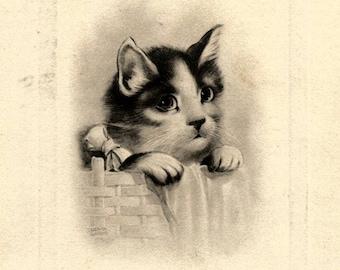 Vintage cat postcard digital download printable instant image
