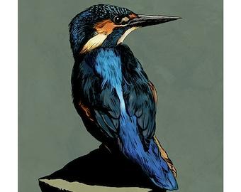 Kingfisher colour art print