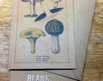 Fungi Note Card #2