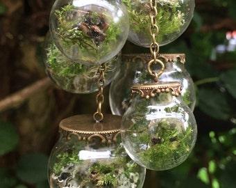 Botanical Mobile Terraruim,lichen,moss,woodland,nature, garden