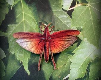 Grasshopper Pin - Catydid - Insect Jewelry - Bug Jewelry - Locust Pin - Grasshopper Brooch - Insect Specimen - Shrink Plastic Jewelry - Art