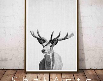 Deer Antlers, Deer Head, Deer Art Modern, Antlers Deer Print, Hanging Deer Head, Deer Decal, Deer Poster, Deer Head Decal, Wilderness Animal