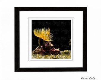 Ocean Photography Macro Photography Animal Photography Photo Greeting Cards Aquatic photography Wall Art Digital Photography Home Decor