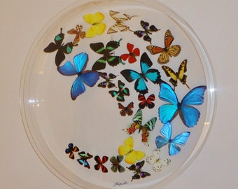 "24"" circle . butterfly display,mounted butterflies,butterfly art, real butterfly art, butterflies in acrylic cases"