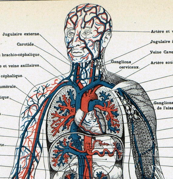Encyclopedia of human anatomy