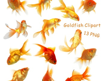 Fish Clipart, Goldfish Clipart, Digital Goldfish Image, Goldfish Graphics, Clipart Goldfish, Intant Download, 300 DPI,  PNG Files