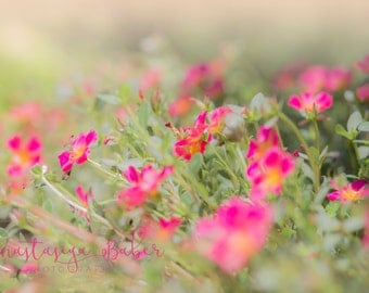 Fine Art Photography Print of Pink Wildflowers
