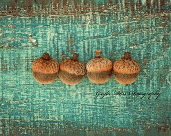 Acorn Photography,Nature Photography,Fall Photo,Autumn Photo,Still life,aqua,teal,rustic,Botanical,Oak,food photo,turquoise wood,fall gift