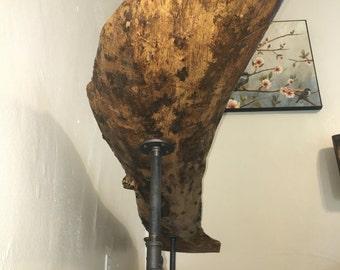 Unique Cupped Elm Log Bench