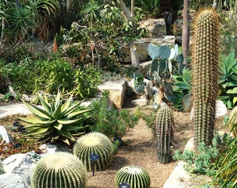 Cacti and Succulent Seeds Mixture - 100 Seeds
