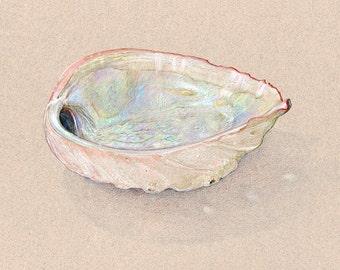 Abalone print / archival print / sea life wall art / colored pencil drawing