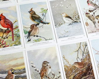 Vintage Birds of North America Art Cards | Set of 4