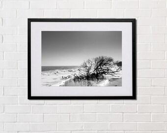 Tree, Beach, sea, printed on glossy or matte photo paper, Italy, Basilicata, B&W