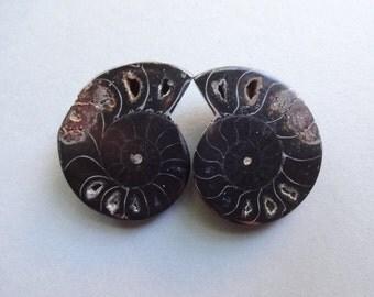 Pair black Ammonite Fossil cabochons 32x28 mm