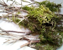 Mossy twigs for craft, natural craft supplies, small twigs with green moss