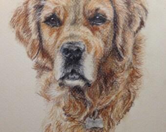 Coloured Pencil Pet Portrait