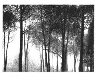 Magic Forest Lights