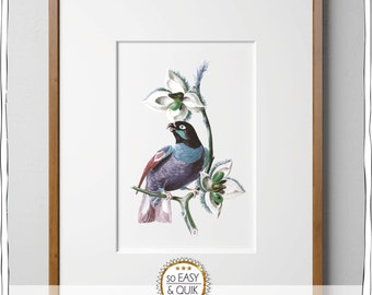 Blue - exotic bird - mural - posters - print template