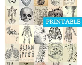 PRINTABLE Vintage Anatomy Erin Condren Vertical Planner Stickers, Vintage Medical Illustration, Quirky stickers