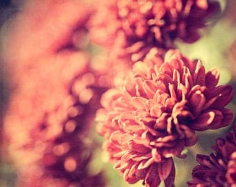 Shabby Chic Wall Decor, Mums, Chrysanthemum, Burgundy, Red, Muted Tones, Cottage Chic, Dreamy, Flower Photography, Floral Wall Decor, Fall
