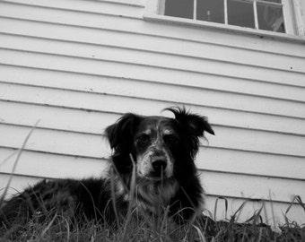 8X10 Fine Art Photography Print - Dog