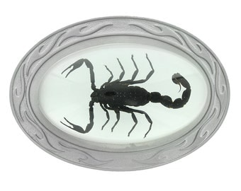 Real Scorpion Belt Buckle