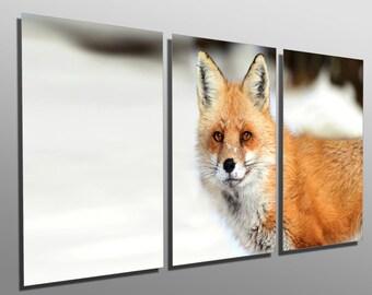 Metal Print - Red Fox Portrait - 3 Panel split, Triptych - Multi panel Metal wall art on HD aluminum prints for wall decor, interior design.