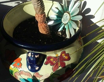 butterfly pot and pine cone cactus