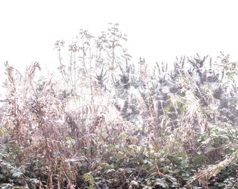 Foggy cobwebs