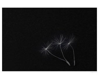Nature Photography PRINT, Three Seeds, Wall Art