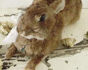 Cute animal preparation, Taxidermy,....Little Bunny/Rabbit...CHARMANT!