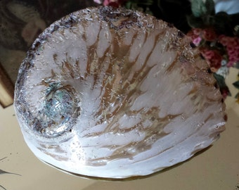 Abalone Polished Seashell Large Abalone Seashell