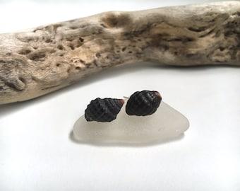 Granulated Drupe Shell Earring Studs