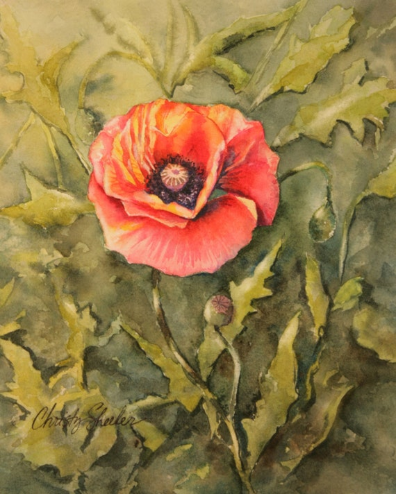 poppies watercolor painting orange yellow red garden nature artwork Christy Sheeler
