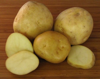 1 lb Irish Cobbler SEED POTATOES
