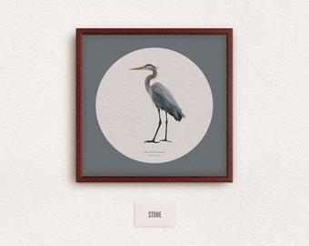 Great Blue Heron (Ardea herodias) - zoological illustration, vintage style, scientific drawing