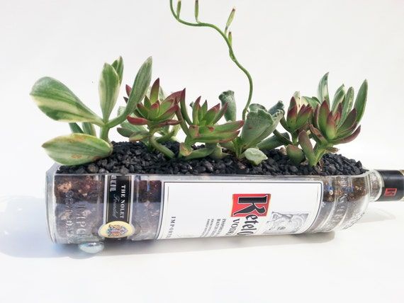 Ketel One Vodka Live Succulent Planter / Vodka Bottle Garden /