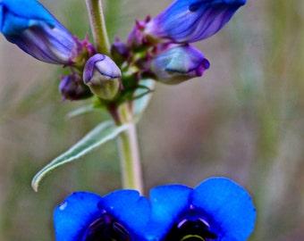 Wildflower magnet pack